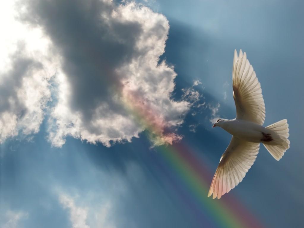 стаей голубь в лучах солнца картинка современных