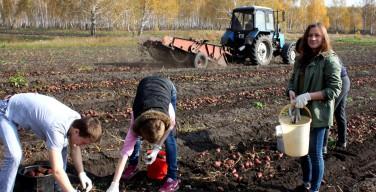 Как «Каритас» Челябинска ездил на поле картошку копать