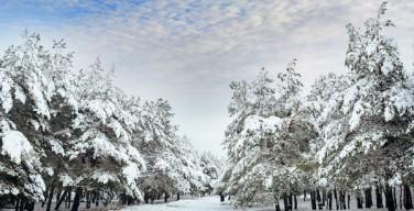 Финны подарили Папе Римскому 10 гектаров леса