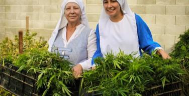 Фейк месяца: монахини, выращивающие марихуану