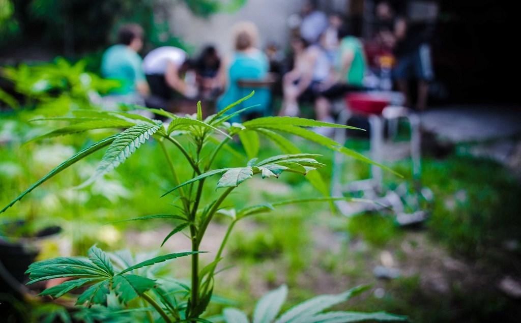 Реабилитационные общины выступают против легализации каннабиса в Италии
