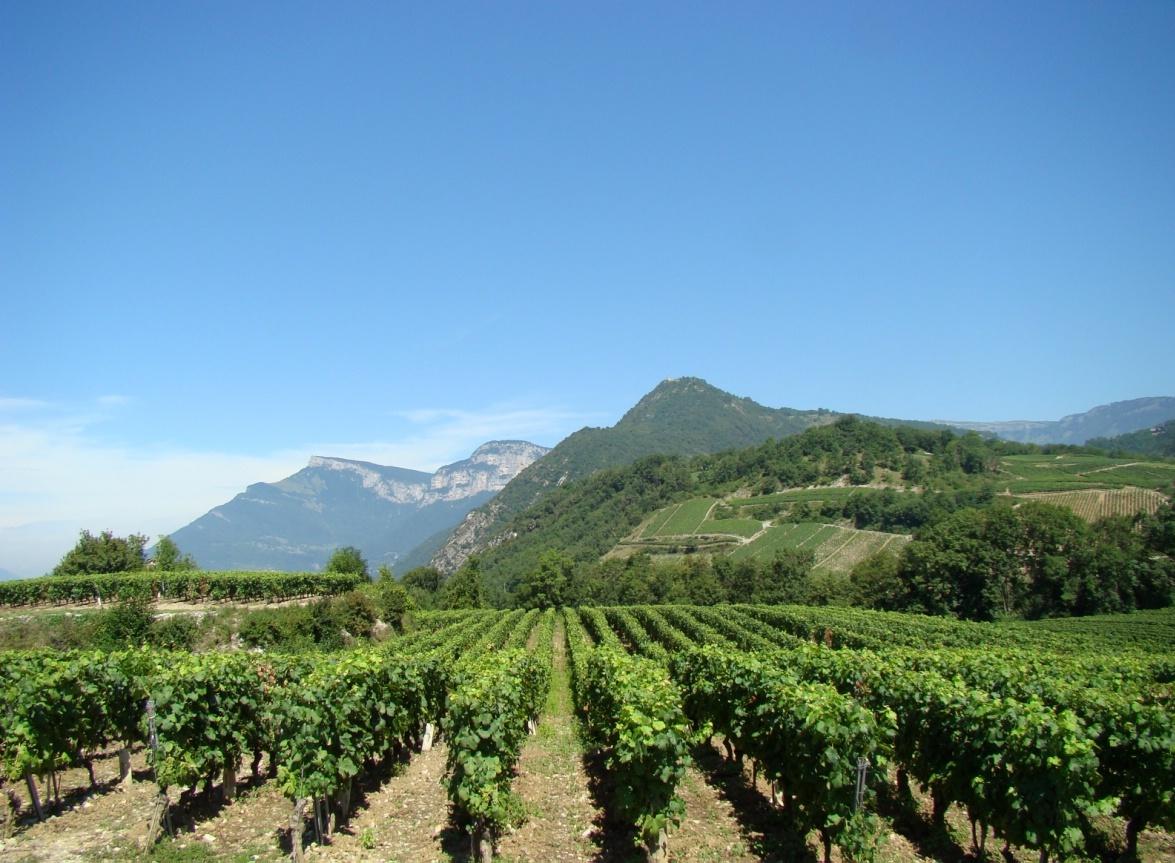 «В истории Христианской Церкви вино занимает очень важное место». РПЦ запускает собственное производство вина