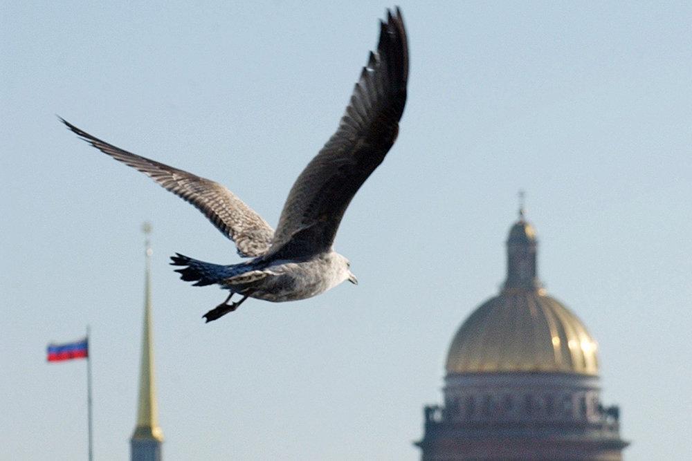 Директор Исаакия призвал четче определить положение Церкви в современной России