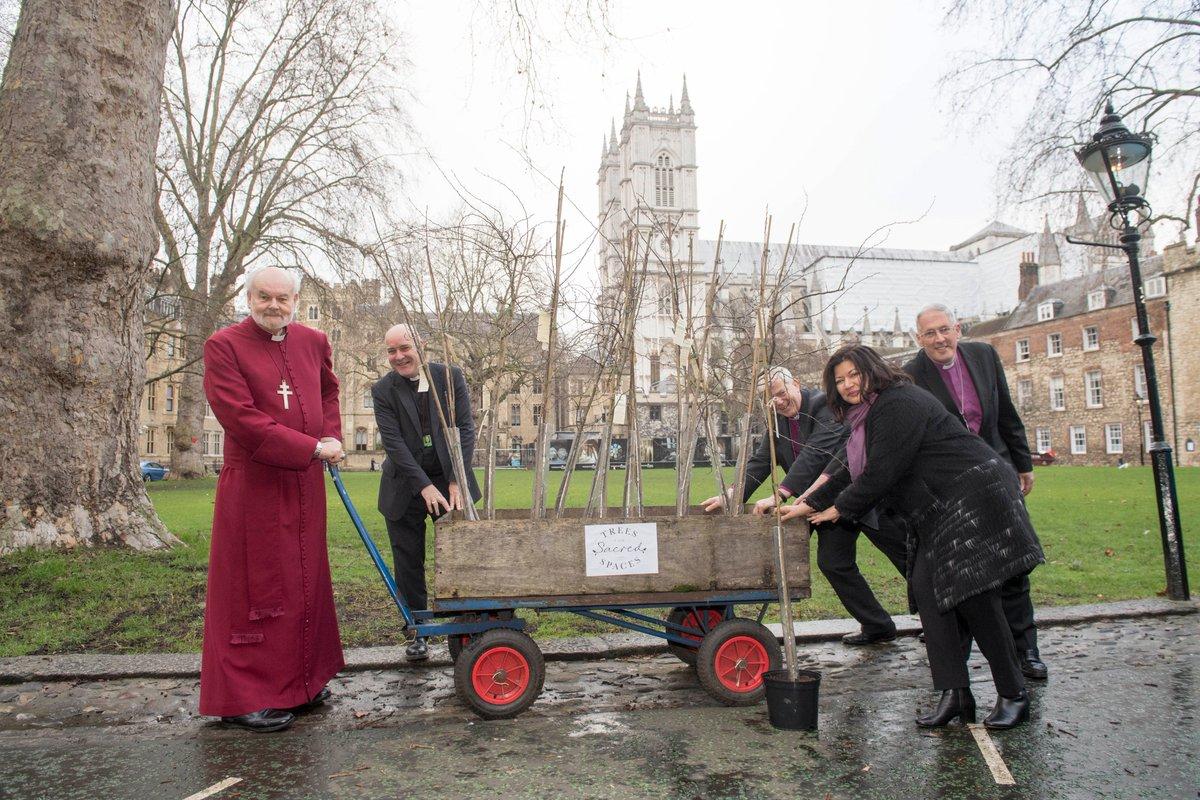 Лондонские церковные приходы высаживают деревья, чтобы сделать город зеленым