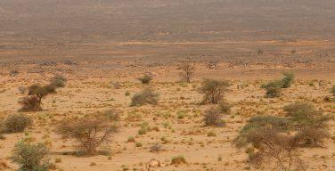 Папа: опустынивание — это серьёзный экологический кризис нашего времени