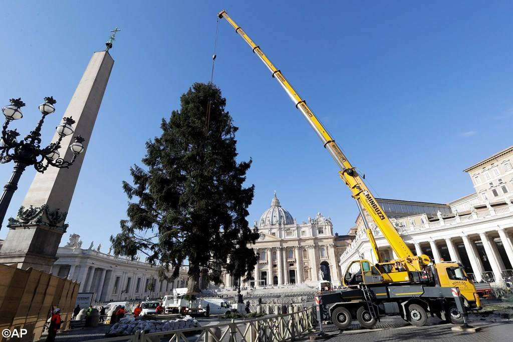На площадь Св. Петра прибыла рождественская ёлка из Польши