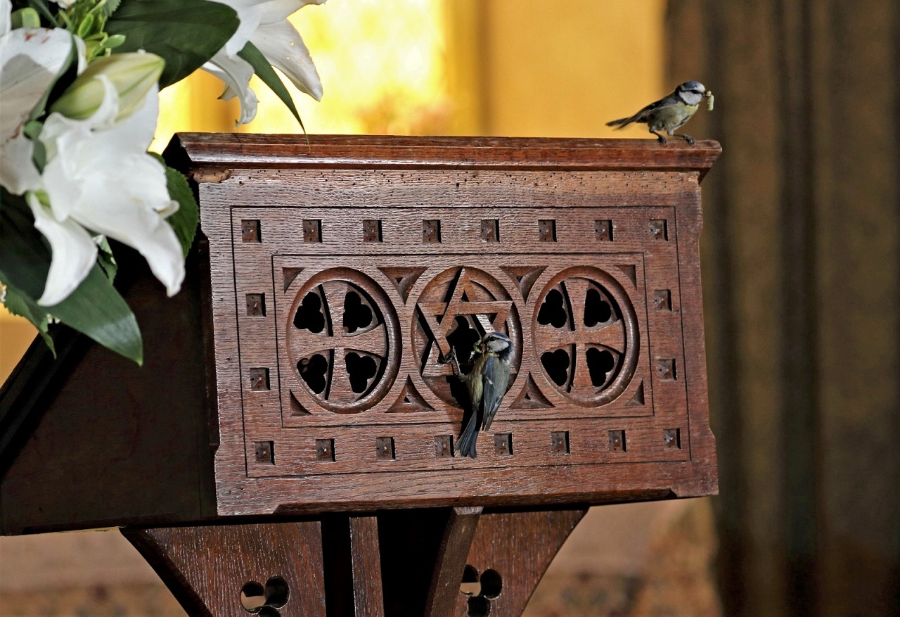 В Британии церковь временно закрыли ради синиц – они вывели птенцов в кафедре викария