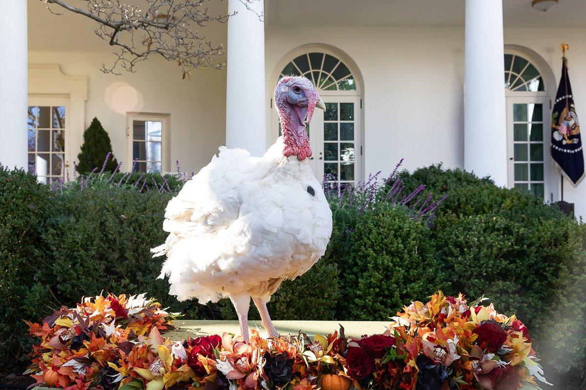 В США отпраздновали День благодарения