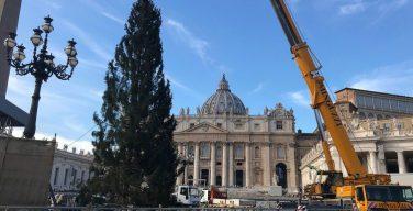На площади Святого Петра установлена рождественская елка