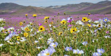 День защиты жизни в Казахстане: помощь детям с синдромом Дауна
