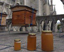 Сотни тысяч пчёл из ульев на крыше собора Парижской Богоматери пережили пожар (+ ВИДЕО)