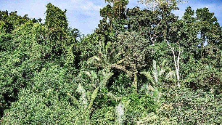 Кардинал Пьетро Паролин, выступая на Генеральной Ассамблее ООН, призвал к защите тропических лесов