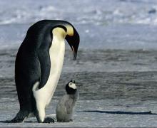 Размышления об изменяющемся мире — «Химия веры. Марш пингвинов и танцующие пчёлы»