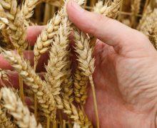 Папа Франциск предложил создать всемирный фонд борьбы с голодом