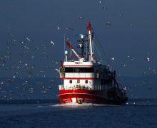 Благотворительная католическая служба «Апостольство моря» переименована в Stella Maris (Звезда морская)