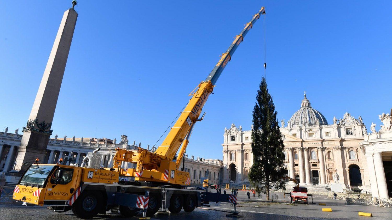 Рождественская ель прибыла на площадь Святого Петра (ФОТО + ВИДЕО)
