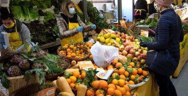 Папа обратился с посланием к ассамблее итальянских аграриев