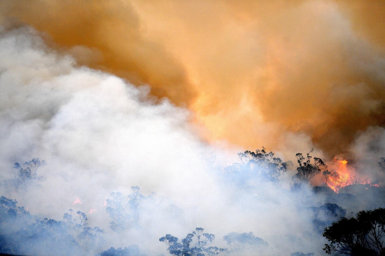 Епископы Австралии: крик Земли – это крик бедных