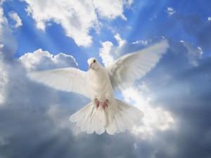 Символ Святого Духа - голубь