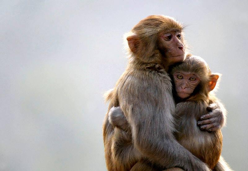 О материнской любви… То, чему нас учат животные