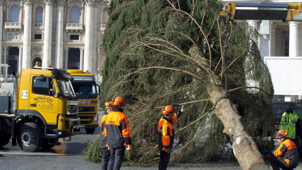 Рождественская ель из немецкой Баварии прибыла на площадь Святого Петра