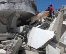 В Эквадоре пес, спасший 7 человек из-под завалов, умер от изнеможения