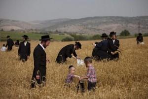 Набожные евреи в поле