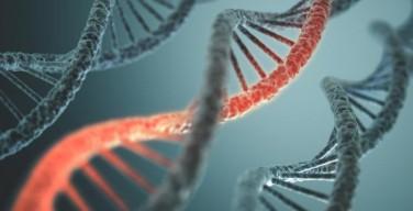 Ученым разрешены генетические эксперименты над человеком