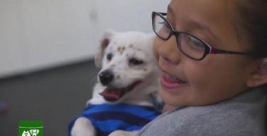 10-летняя глухая девочка из Калифорнии научила глухого щенка языку жестов (ВИДЕО)