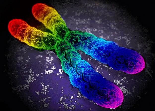 Гомосексуалистами не рождаются ? ученые опровергли основной аргумент ЛГБТ-активистов