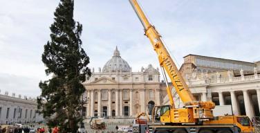 На площадь Святого Петра прибыла рождественская ёлка из Тренто