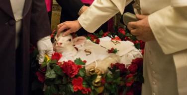 В день памяти святой Агнессы Папе преподнесли двух ягнят для паллиев