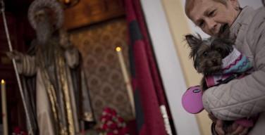 В Испании и Латинской Америке католики благословили домашних животных