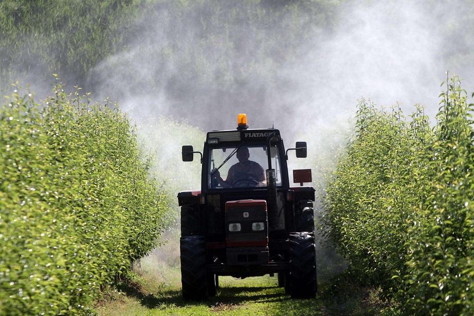 Кардинал Паролин: возродить сельское хозяйство ради пищи для всех