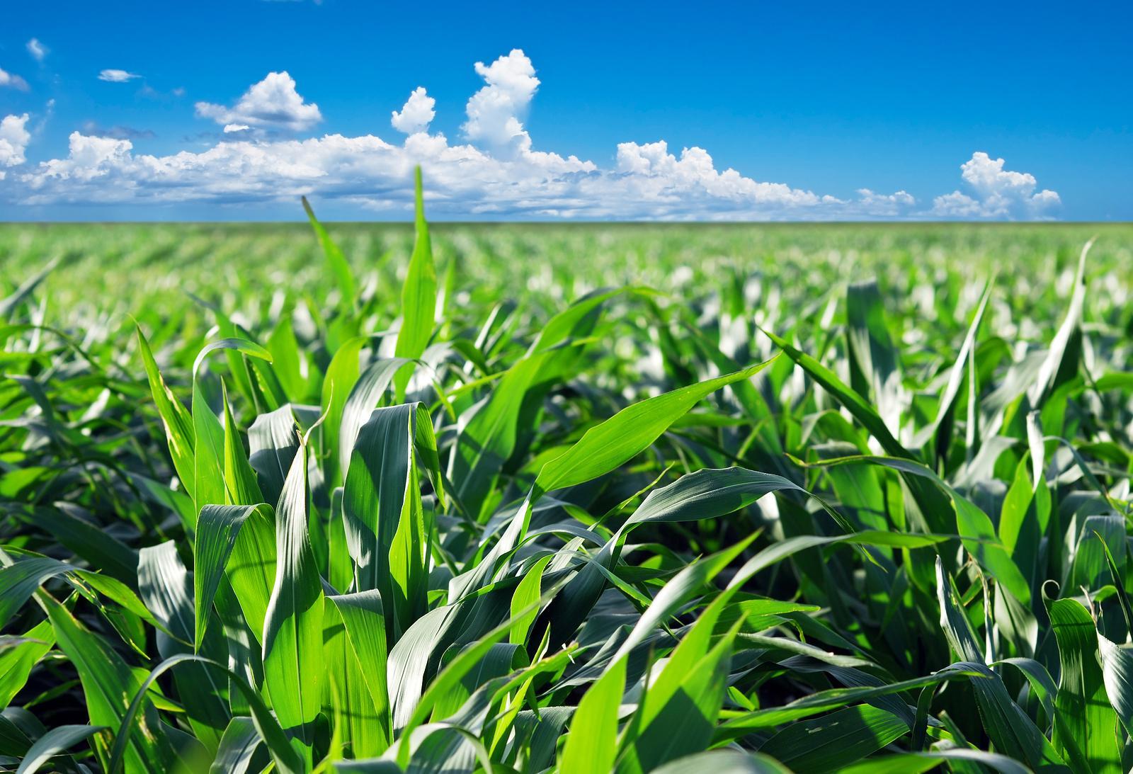 Церковь и ГМО