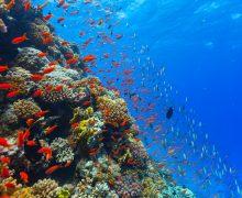 Папа: мировой океан является общим достоянием человеческой семьи
