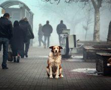 В подмосковном храме РПЦ впервые пройдет молебен о бездомных собаках и кошках